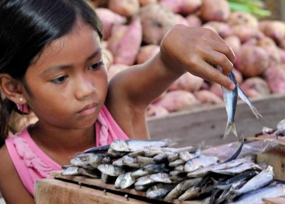 Share of a fish farm