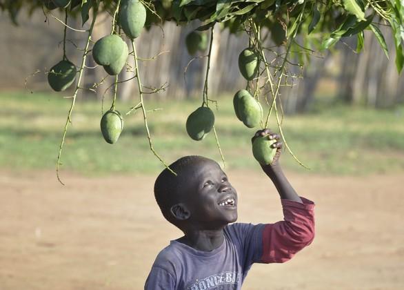 Fruit-tree farm