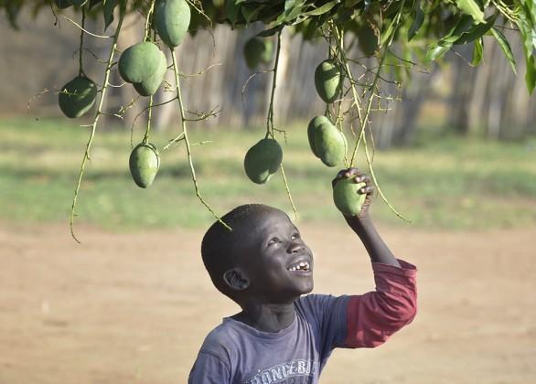 Fruit-tree seedling