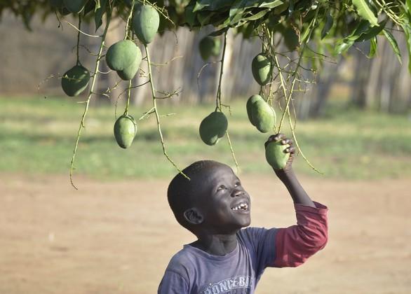 Fruit-tree nursery