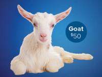 Goat product thumbnail
